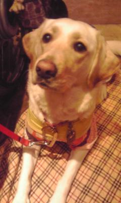 介護犬クロエ