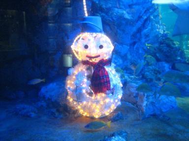 水槽クリスマス 2
