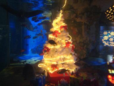 水槽クリスマス 3