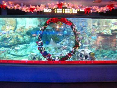水槽クリスマス 1