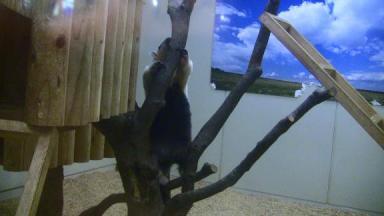 木登りアイ