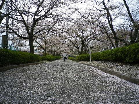 桜道の帰り道
