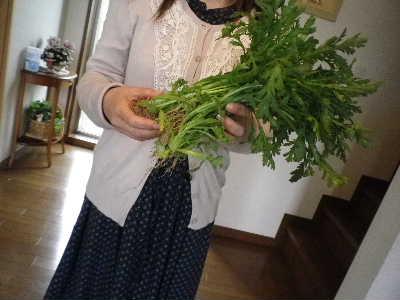 菊菜いただきました。