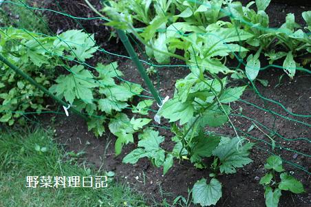 green curtain May 29 09