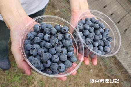 blueberry farm Jun 13 09