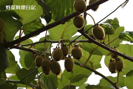 kiwi Jun 13 09(☆)