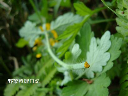 kusanoou May 09