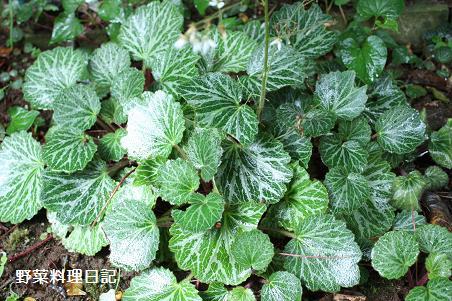 yukinoshita May 09