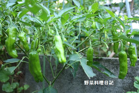 shishitou Jul 26 09