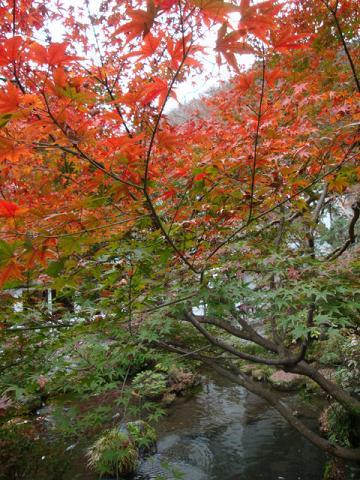 fujiya Dec 5 09
