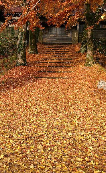 養泉寺の落葉-2006/11/29-1