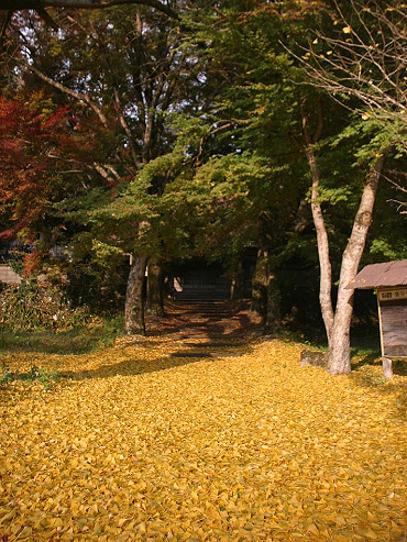 養泉寺の落葉-2008/11/21