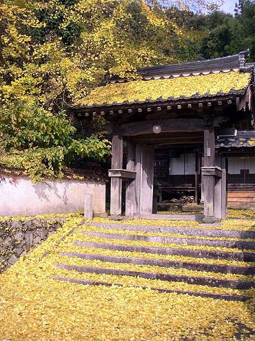 黄色く染まった地蔵院の山門
