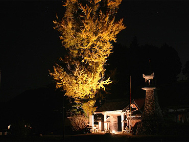 正現寺ライトアップ-1