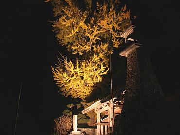 正現寺ライトアップ-2