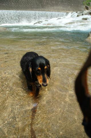 riverdog03.jpg