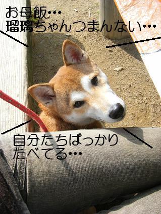 11 02行楽6