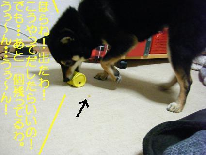 知育玩具とブロマイド12中1