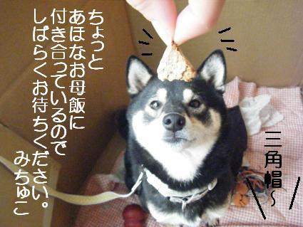 しばらく0115( 0810 31)
