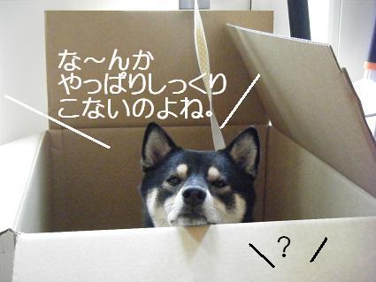 ダンボールみっちゅ再び。10 15 08 006