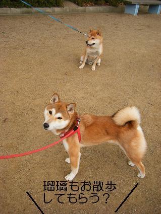 みんなで散歩!(01 01)7