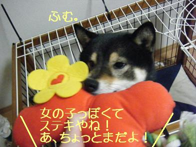 まんまるプレゼント(0313)3