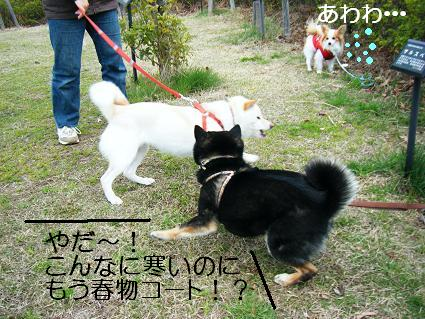 遠足女優対決再び(03 27)1