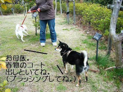 遠足女優対決再び(03 27)6