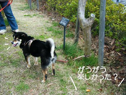 遠足女優対決再び(03 27)7