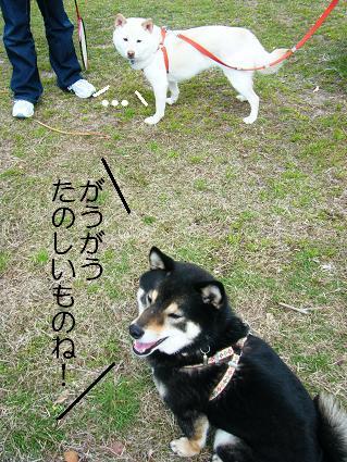 遠足女優対決再び(03 27)9