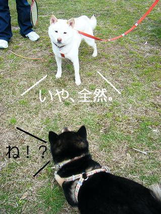 遠足女優対決再び(03 27)10