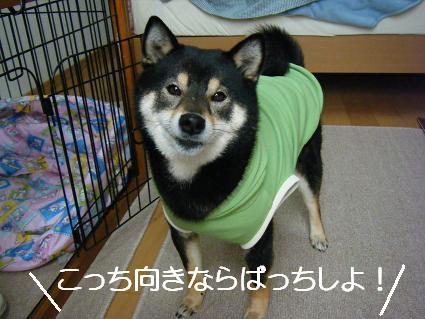 新しいお洋服!(04 03)6