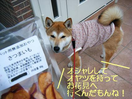 お花見一回(目04 04)