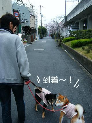 お花見一回(目04 04)3