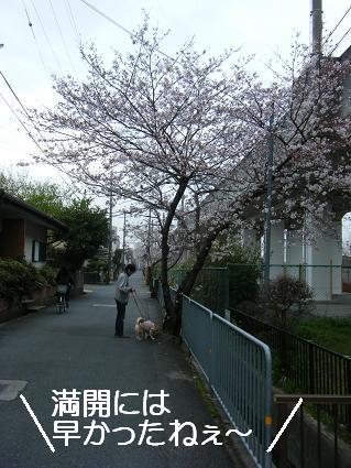 お花見一回(目04 04)5