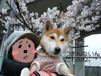 お花見一回(目04 04)11