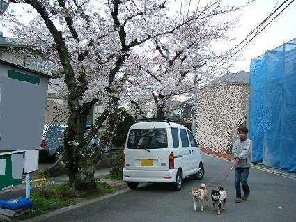 お花見一回(目04 04)14