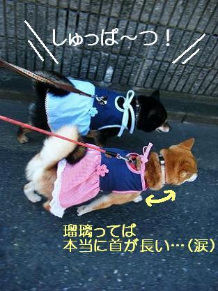 お花見二回目①(04 11)2