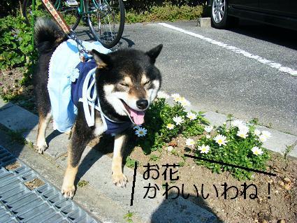 お花見二回目①(04 11)5