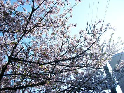 お花見二回目①(04 11)8