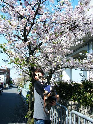 お花見二回目①(04 11)11