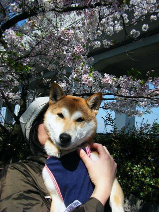 お花見遠足②(04 11)