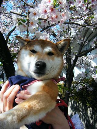 お花見遠足②(04 11)3