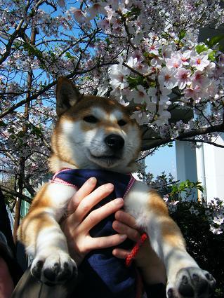 お花見遠足②(04 11)2