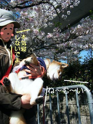 お花見遠足②(04 11)7