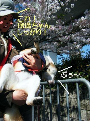 お花見遠足②(04 11)8