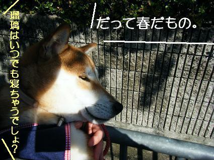 お花見遠足②(04 11)6