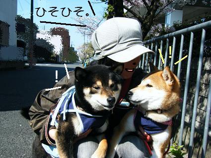 お花見遠足②(04 11)12