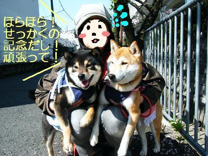 お花見遠足②(04 11)11
