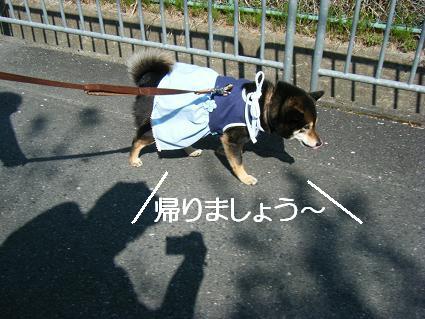 花見散歩③(04 11)1